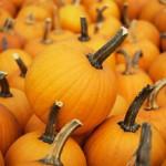 fall-florida