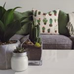 cactus-cactus-plant-contemporary-1005058